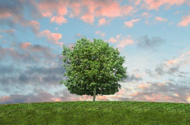 Jak firma może zadbać o środowisko?